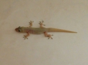 Barry The Bathroom Lizard expresses his displeasure when the laundry basket is moved